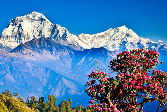 https://www.holidaynepaltrek.com/package/ghorepani-poonhill-trek/