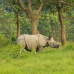 One horn rhino - Chitwan national park
