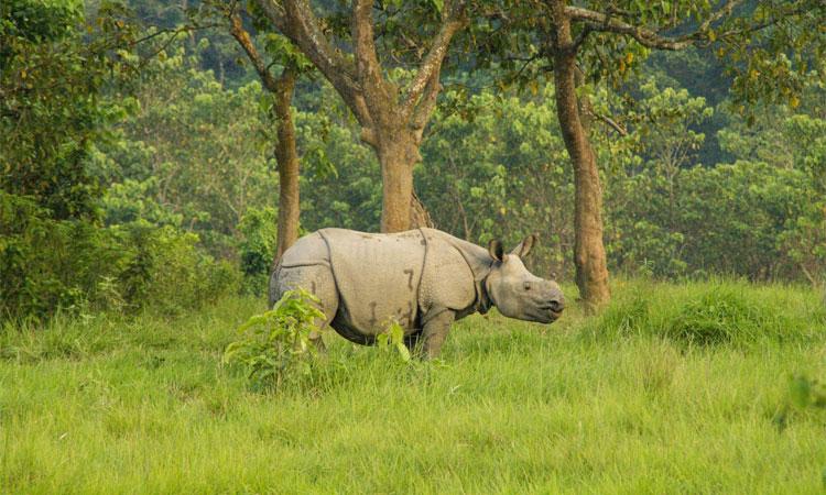 One horn rhino - Chitwan national park