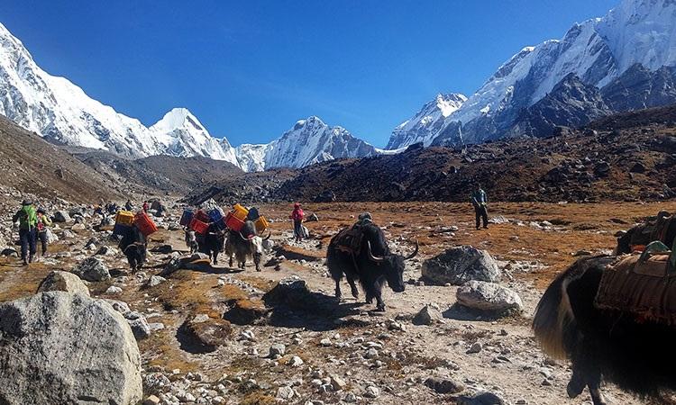 Instant Everest Lodge Trek